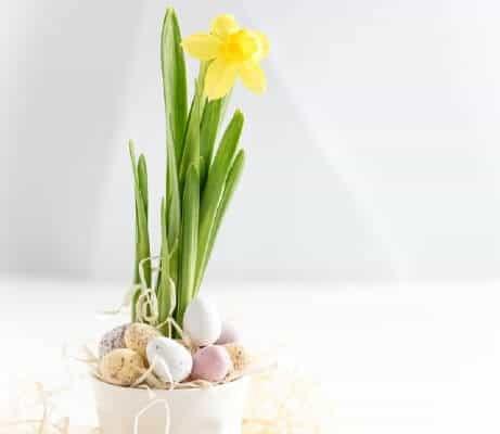 Dove nascondere le uova di Pasqua